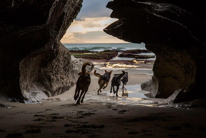 working-dog-photography-shepherds-realm-andrew-fladeboe-7