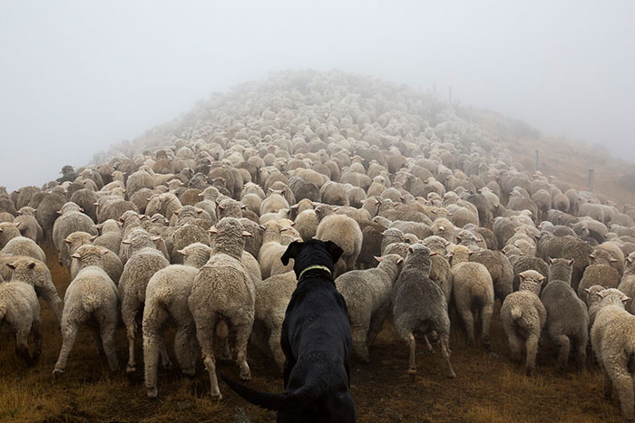 Photographer Takes Portraits Of The World's Hardest-Working Dogs