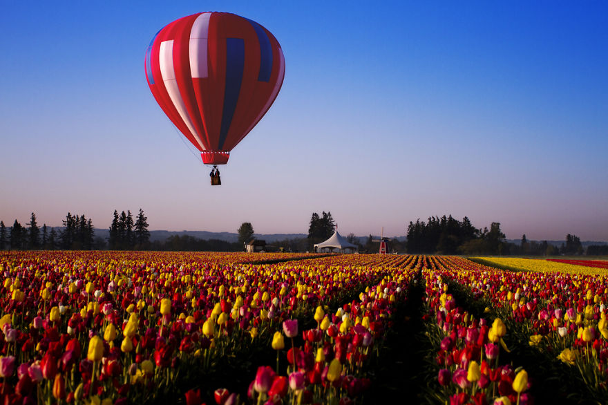 Skagit Valley Tulip Festival, Usa