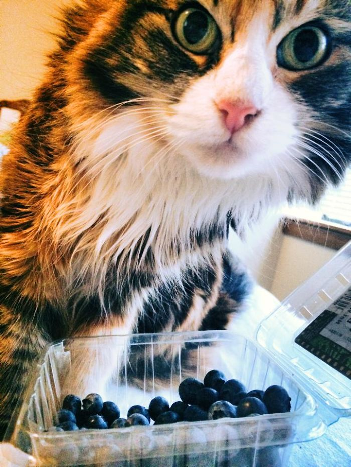 Margot Likes Blueberries