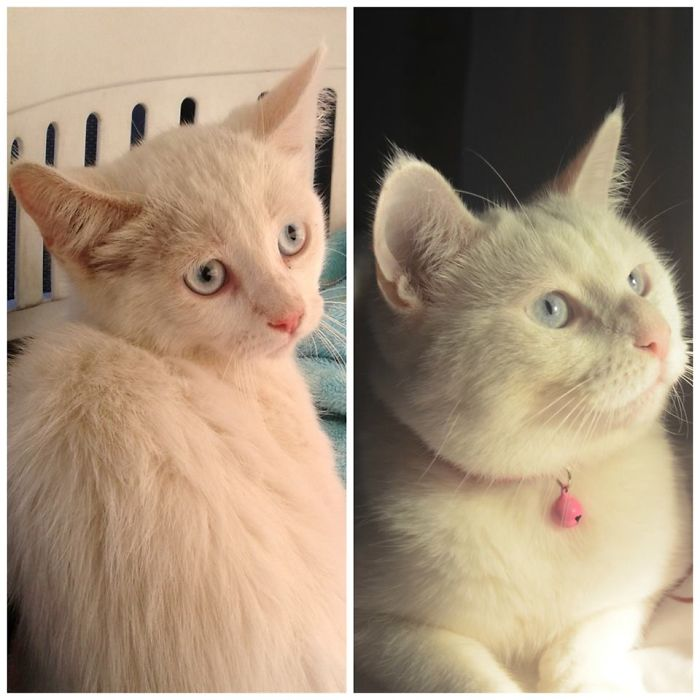 Valentina The Day We Got Her All Thin And Scared, Now She's An Stunning And Happy Young Lady