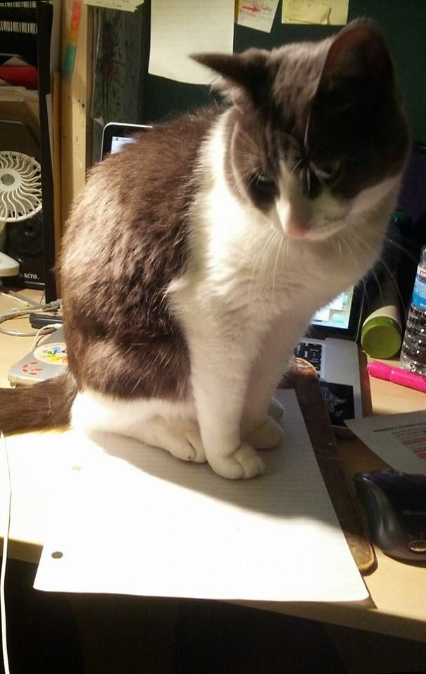 My Cat Sat On My Homework Is The New The My-dog-ate-my-homework. Best Procrastination Excuse