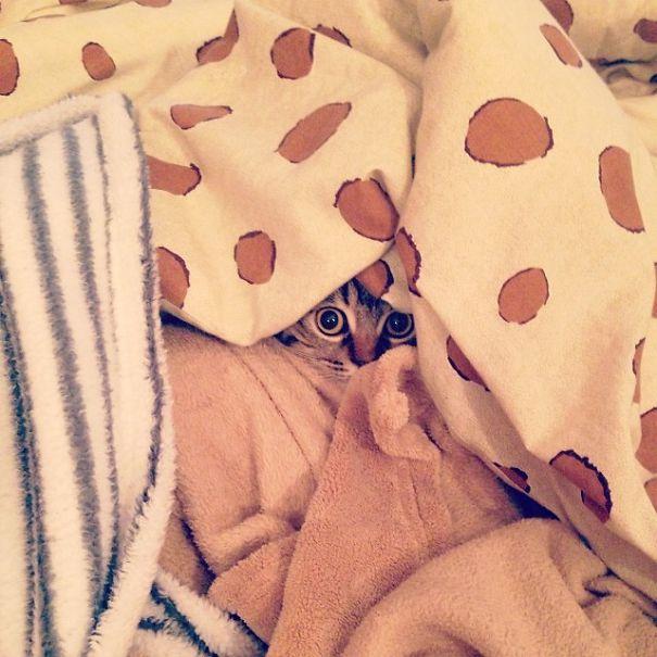 Brrrr... I'm Cold!