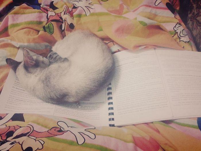 Study… My Sleeping,human