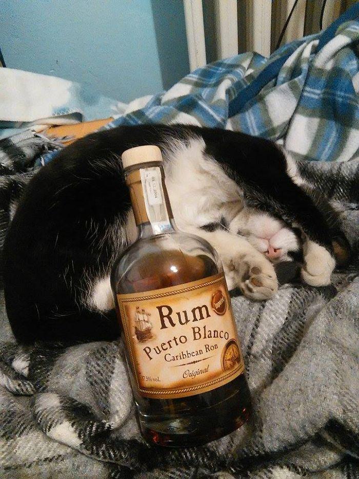 Cat And Rum