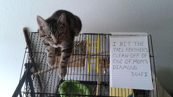 Nickel Cat