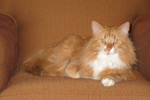 Orange Is The New Cat!