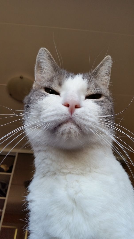 Muka Kucing Ketika Mereka Merencanakan Sesuatu Yang Jahat