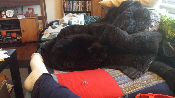 Can You Find Lilith The Black Cat?