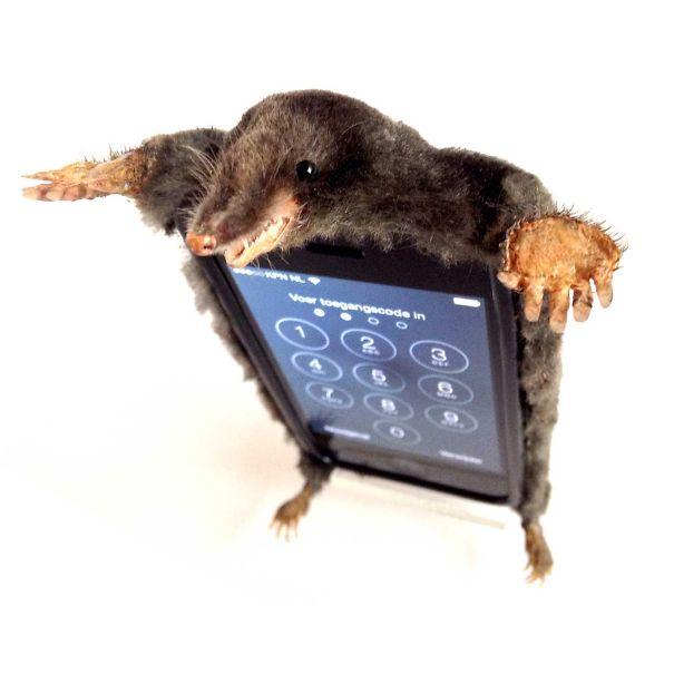 Mole Skin Iphone Case Www.jopiebiesters.com