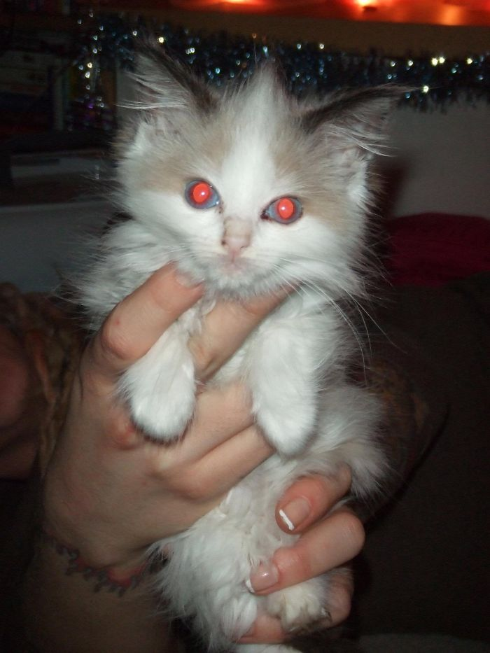 Doom Kitty