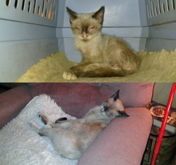 Sunshine Was Abandoned And Found With Infected Eyes, Matted And Flea Infested Fur.