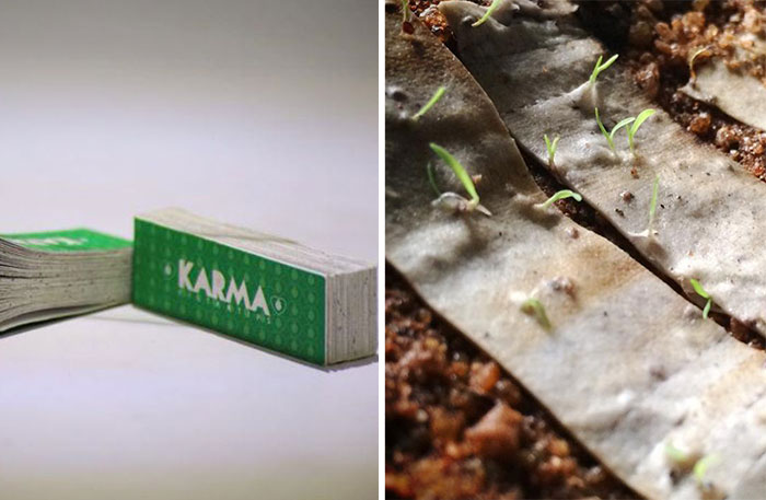 Biodegradable Cigarette Filters Embedded With Seeds Grow Into Trees When Thrown Away