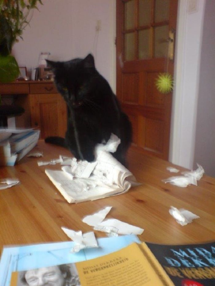 My Cat Can't Stand My Sudoku Addiction, She Tears The Books Apart If She Gets The Chance!