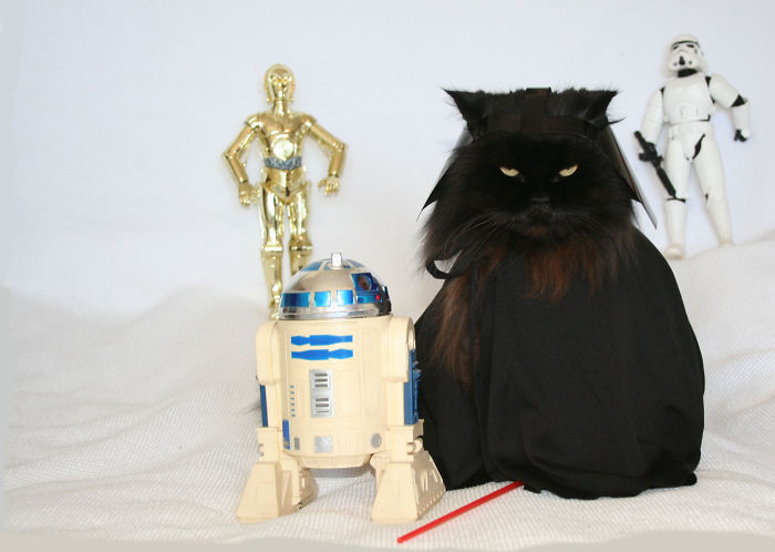 May The Feline Be With You!