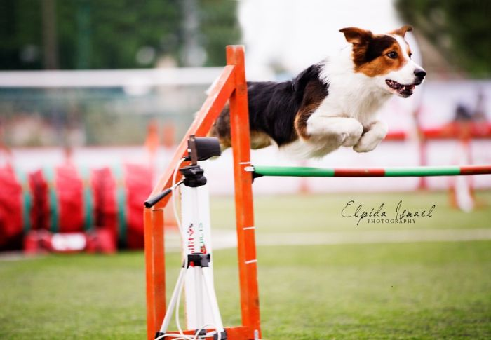 Dog Agility On Stunning Photos By Greek Photographer Elpida Ismael