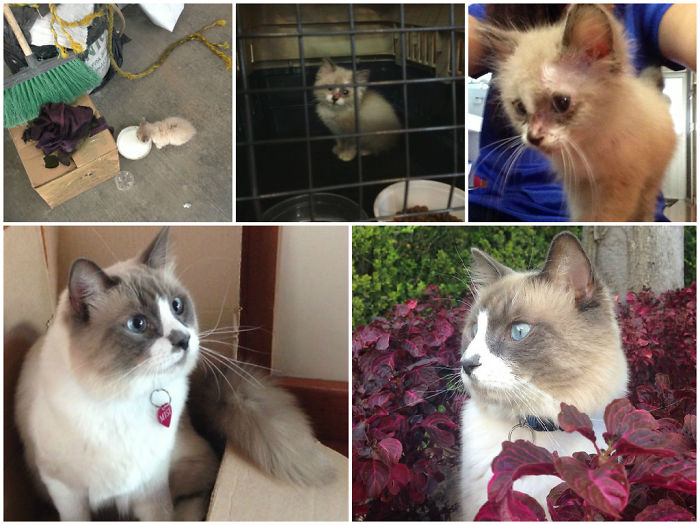 Misiberto: Found Outside A Factory Hungry Dirty + Ringworm, Now He Is Gorgeous And Loved