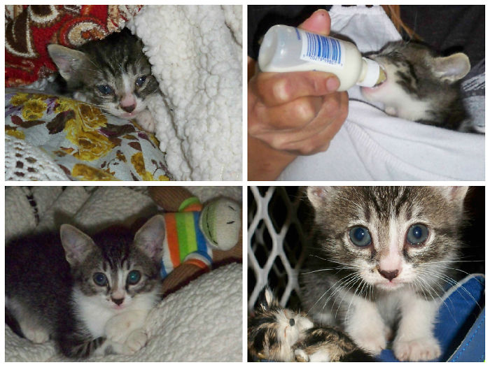 Bella, Found In Our Garage At Around 3 Weeks Of Age (top 2 Photos). A Month Later. =)