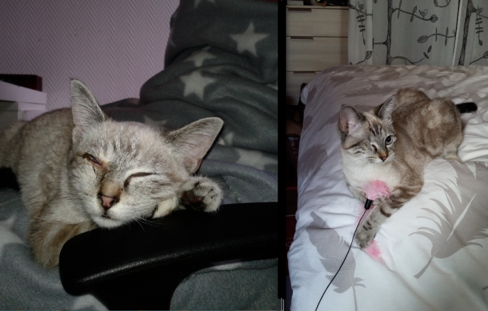 Gaïa Just After We Took Her From A Rescue Centre Suffering A Cat Disease And Then 6 Month Later