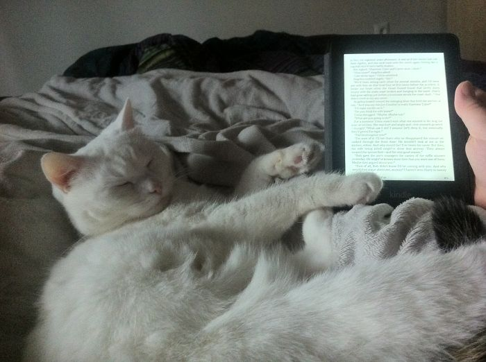 Reading Makes Me Sleepy….purrr