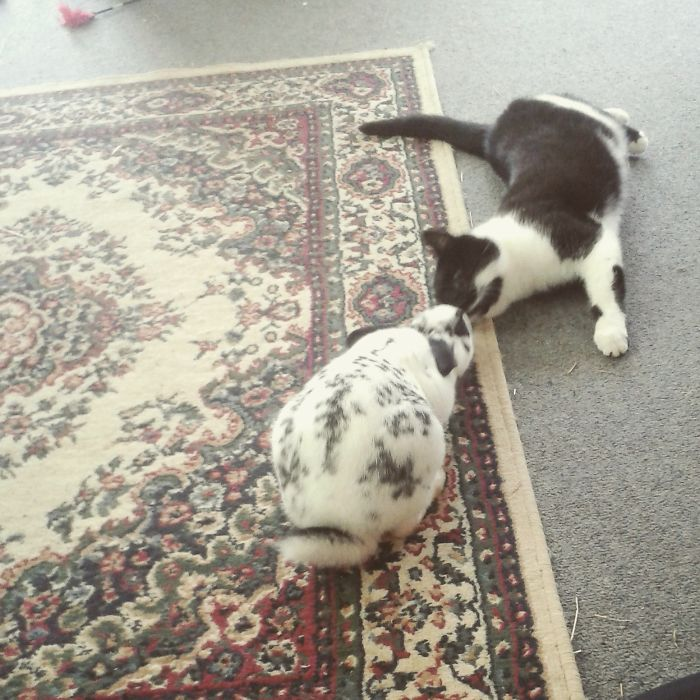 Kitty And Bunbuns Sharing A Kiss