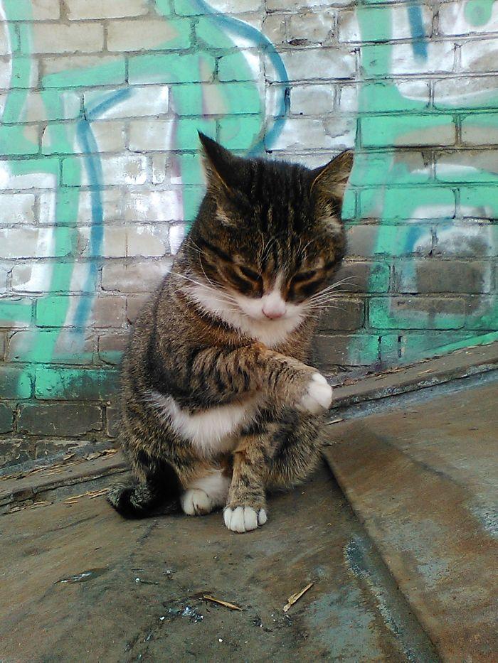 кот бася
