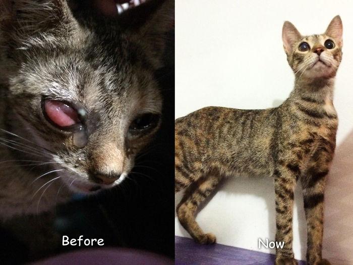 Ive, Before & After - Maullidos De Esperanza Foundation
