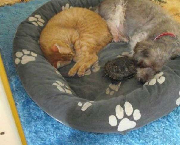 My Cat,dog And Turtle Are Having A Lovely Nap