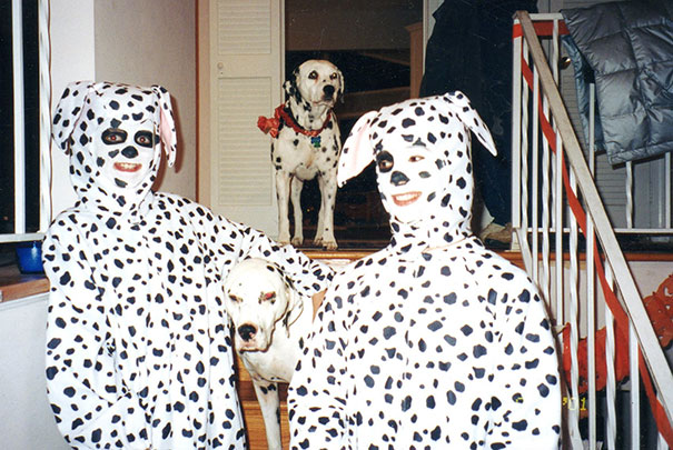 Spot The Embarrassed Dalmatians