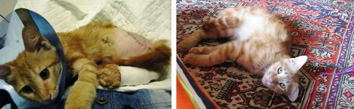 Mazdak, Found In Street Dragging Himself In His Blood And Now In His Forever Home