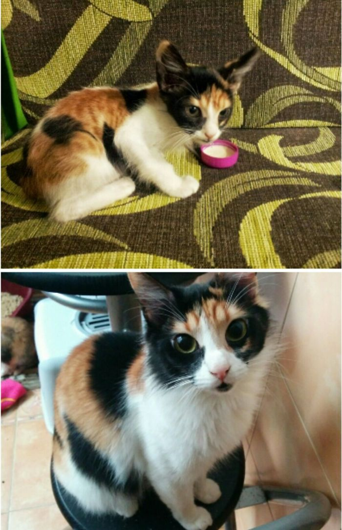My Baby, Rata, Before And After
