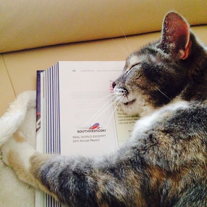 How Your Know Your Textbook Is Boring- It Puts The Cat To Sleep