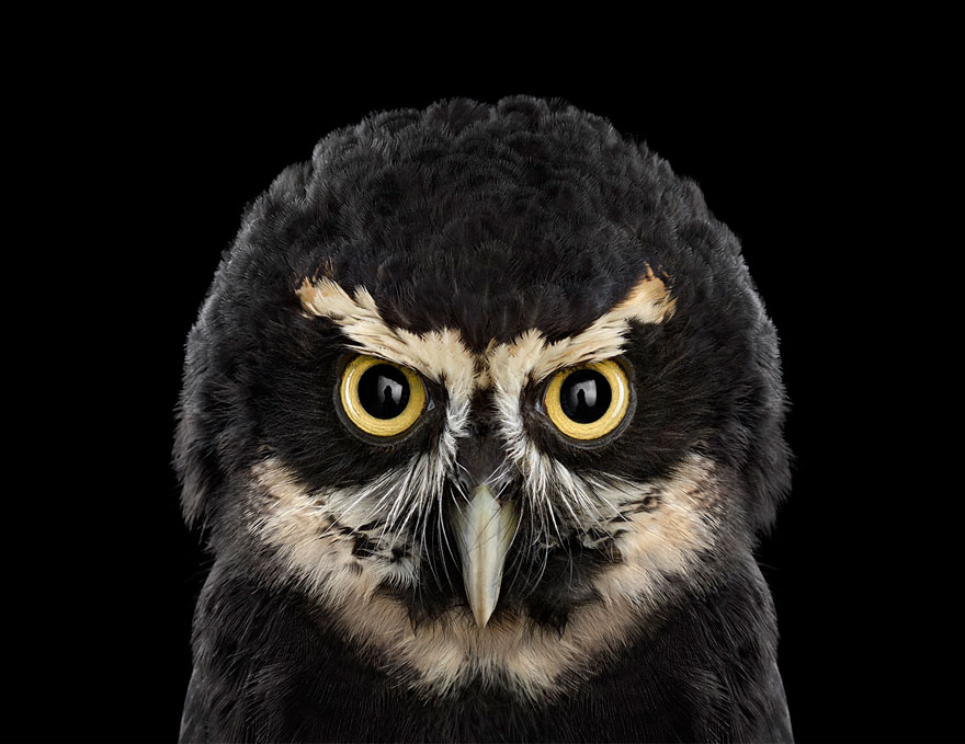 THE-SURREAL-BEAUTY-OF-OWLS3-880