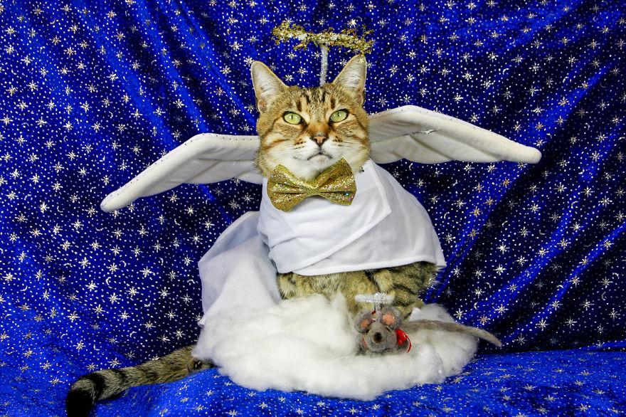 Why Do Cats Love Human Bathtime