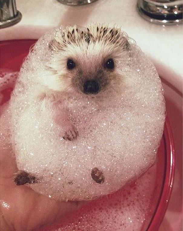 Mr. Needles Taking A Bubble Bath