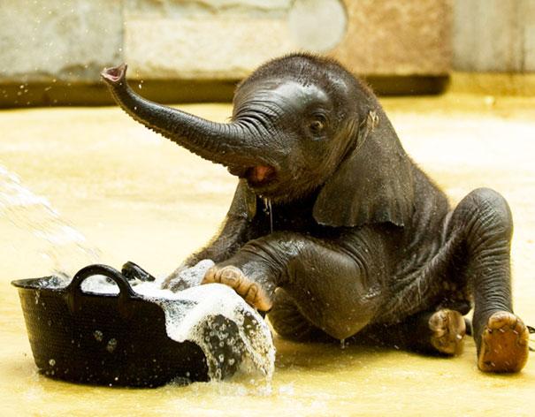 Baby Elephant Taking A Bubble Bath