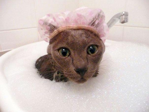 Cat Taking A Bubble Bath