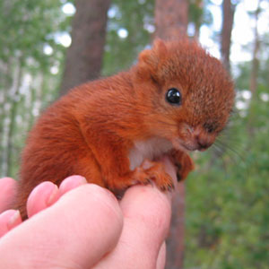 A Badly Injured Baby Squirrel Gets Adopted By Humans