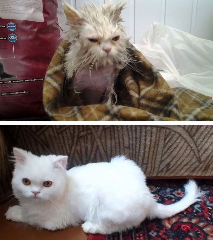 This Cat's Story Has A Very Happy Ending