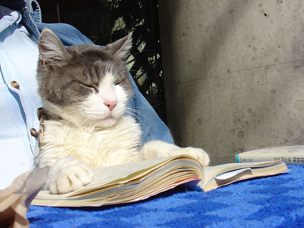 Cat Reading A Book In Tokyo