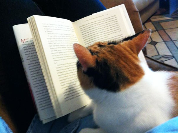 In My Free Time I Teach Underprivileged Cats How To Read
