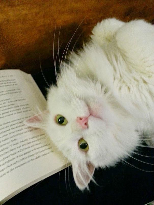 I Seem To Be Having Trouble Reading Lately