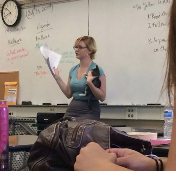 Teacher Finds Abandoned Kittens Near School - This Is How She Teaches Her Class