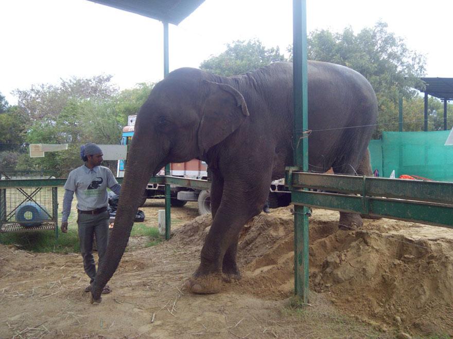 blind-beaten-elephant-lakhi-rescued-wildlife-sos-2
