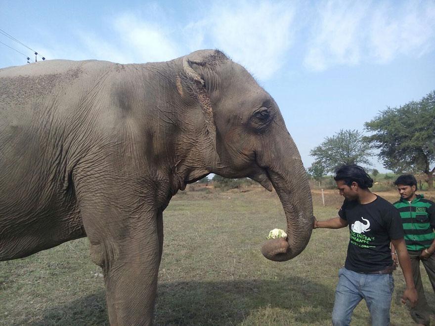blind-beaten-elephant-lakhi-rescued-wildlife-sos-3