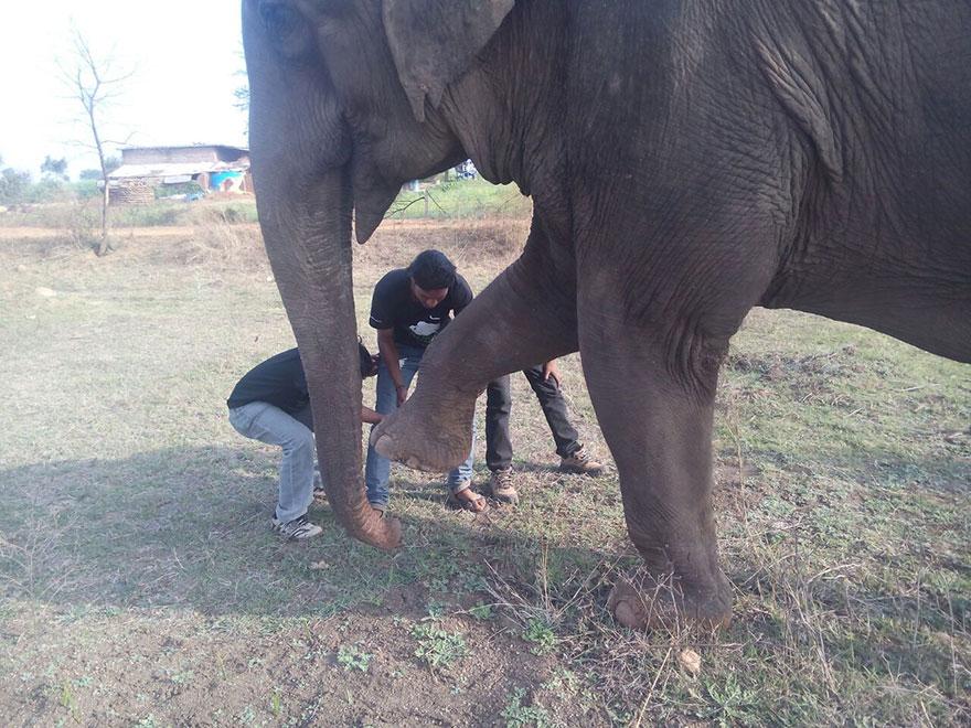 blind-beaten-elephant-lakhi-rescued-wildlife-sos