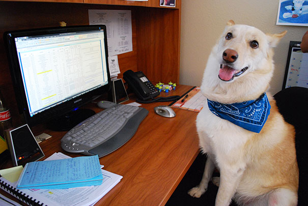 It's Up To Holly To Keep Her Co-workers Cheerful And Productive