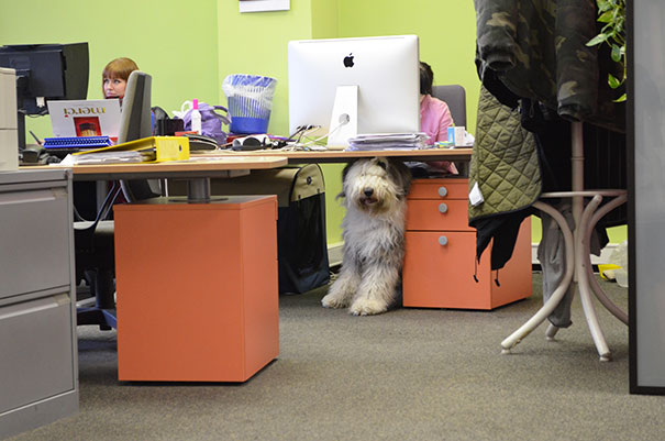 At A Prague Advertising Agency, Every Day Is Bring Your Dog To Work Day