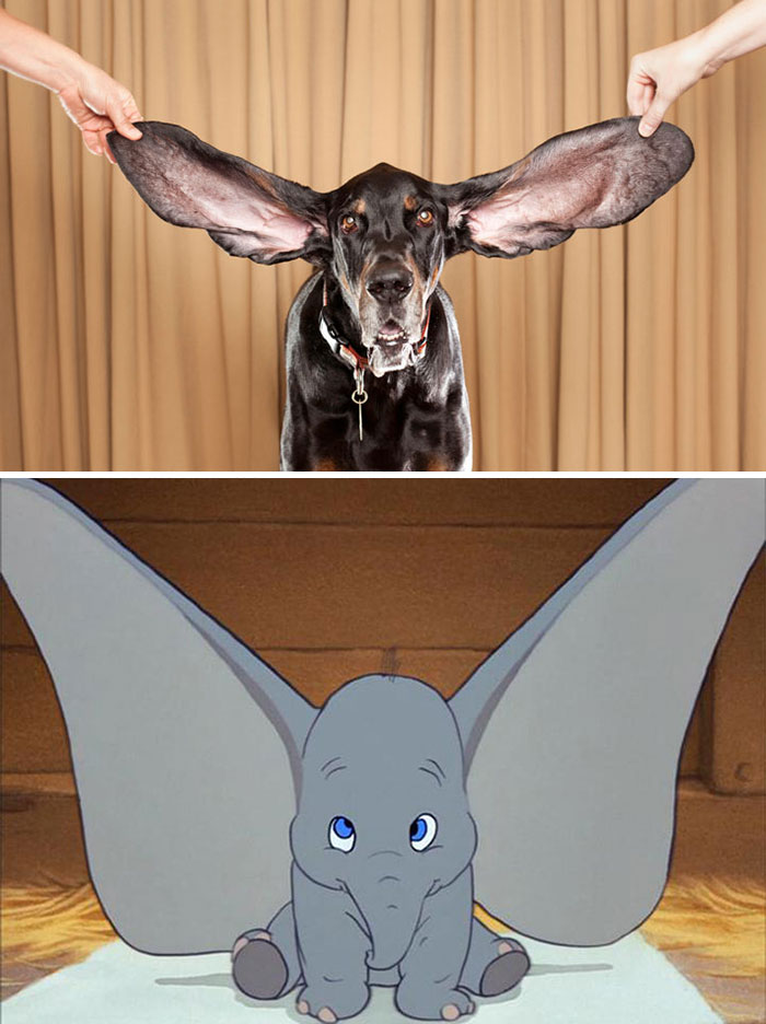 Dog Looks Like Dumbo