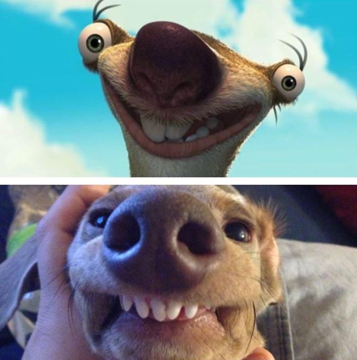 Weenie Dog Looks Like Sid
